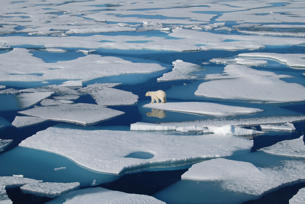 image of a polar bear stranded on floating ice